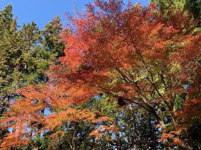 https://www.naganotomato.jp/nagatoma/ririko/assets/images/housyakujikotosi3.jpg