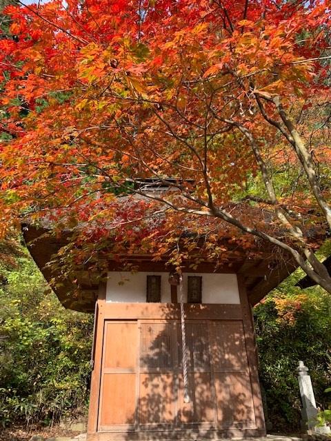 https://www.naganotomato.jp/nagatoma/ririko/assets/images/muryouoryuouji5.jpg