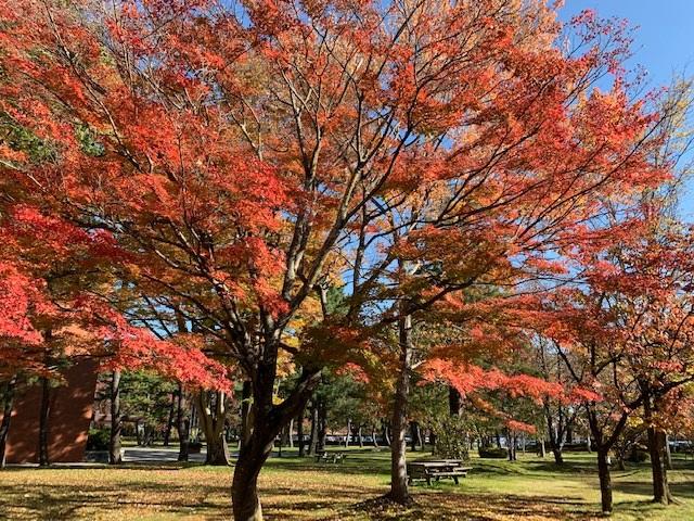 https://www.naganotomato.jp/nagatoma/ririko/assets/images/sikkadaidaidesse3.jpg