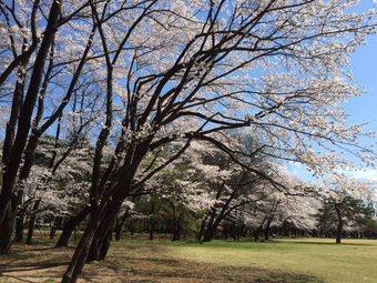SUSUSUSUSUSU3.jpg
