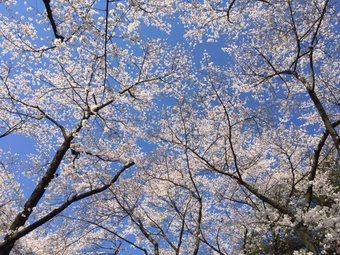 SUSUSUSUSUSU4.jpg
