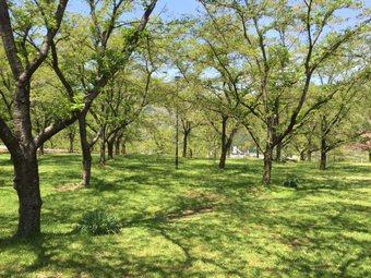 大西公園4.jpg