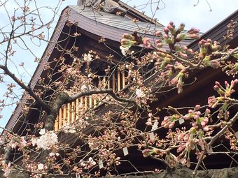 yasukunijinnjya4.jpg