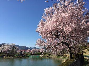 koujisakurakotosi6.jpg