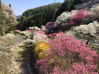 sumihaitumotori1.jpg