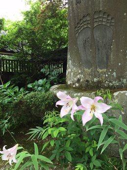 yamasasayuri1.jpg