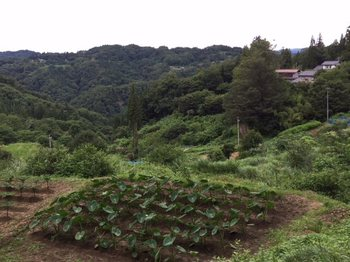 yamanonaka2.jpg