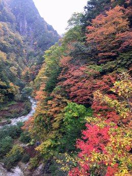 kuzusawakouyou2.jpg