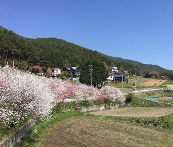 hanamomokaidouminowa2.jpg