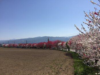 hanamomokaidouminowa5.jpg