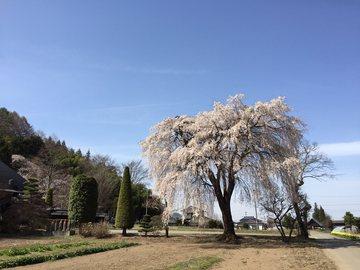 kourinnjiiroiro1.jpg