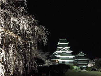 yozakuramatumatu93.jpg