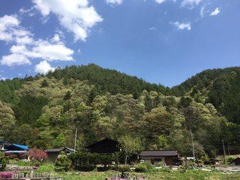 sinryokuiroirodsse5.jpg