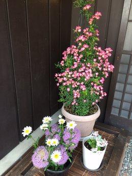 midorikosyoka5.jpg