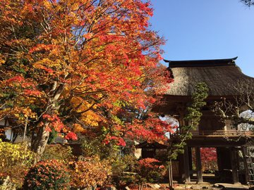 kosenjimigoto5.jpg