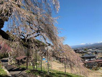 kuyotonosadaew3.jpg
