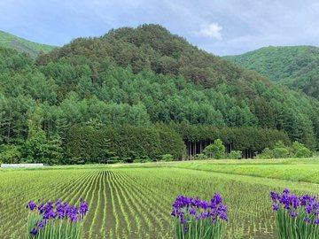 ayameyokokawa3.jpg