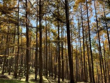 panoramakoueen7.jpg