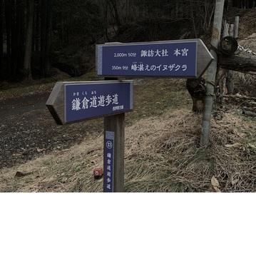 kamisyahaomosiroi4.jpg