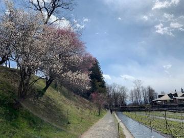 kotosimokoureidaiou3.jpg