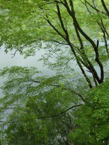 azayakanahappa2.jpg