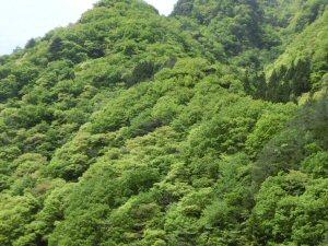 azayakanahappa3.jpg