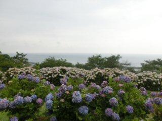 daiouajisaien1.jpg