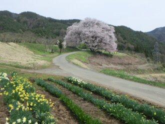 kaminotairasiro1.jpg