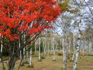 koumiyatihodesuwa5.jpg
