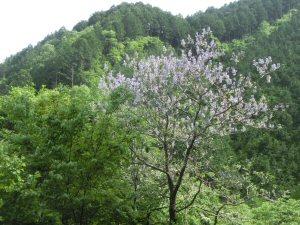 misokawadamunn4.jpg