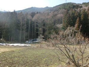 sosouhanabana3.jpg