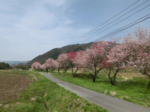 suharadesuwa1.jpg