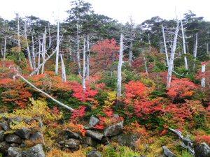 tanokurakurakuea3.jpg