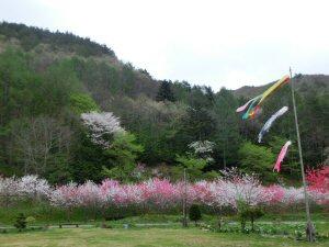 yabuharadesuwa2.jpg